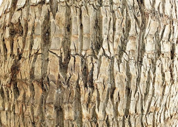 ココナッツ椰子の木の樹皮の質感