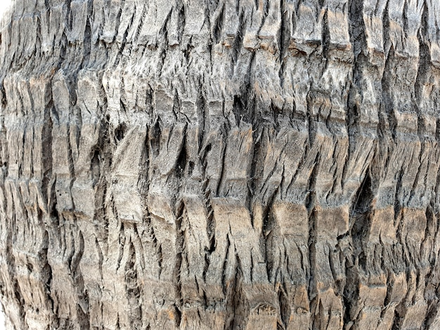 Coconut palm tree bark texture
