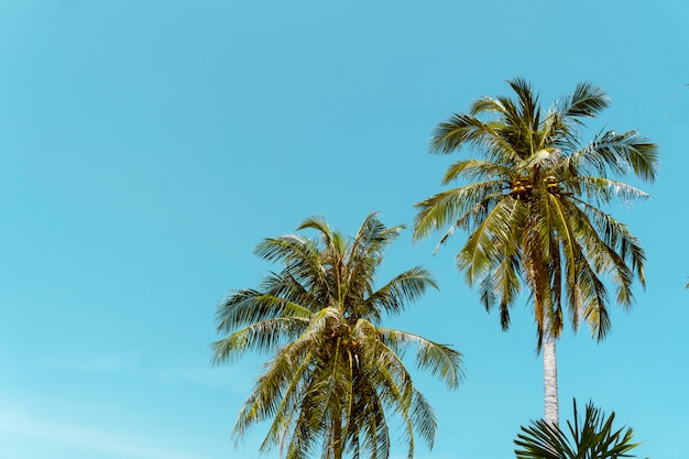 Coconut palm tree beach summer concept