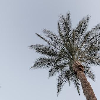 코코넛 야자 나무. 아름 다운 여름 이국적인 열 대 자연 배경