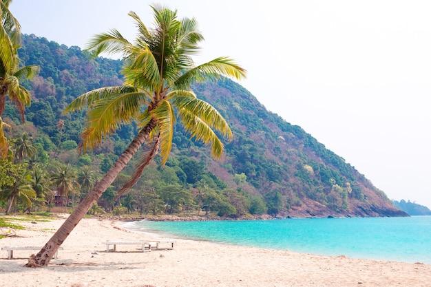 人けのないビーチの海沿いのココナッツ椰子の木、コピースペース