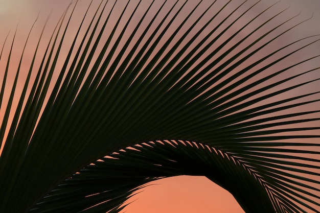 Coconut palm tree leaf against pastel color sunset sky of easter island, chile