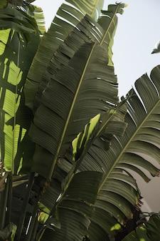 Листья кокосовой пальмы. красивая летняя экзотическая тропическая природа