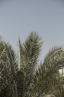 코코넛 야자 나무 잎. 아름다운 여름 이국적인 열대 자연