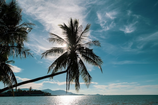 Coconut palm tree on the ocean against turquoise sky in koh samui island in thailand.