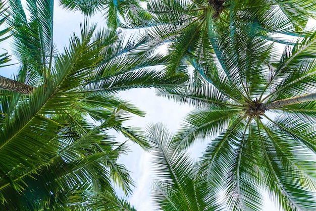 空の背景にココヤシのヤシの木