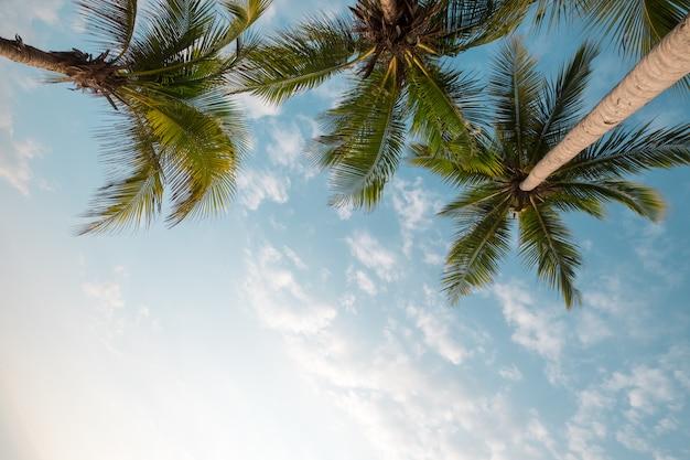 夏の朝の日差しと熱帯のビーチの青い空にココヤシの木