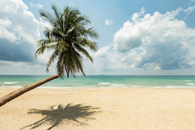 Coconut palm tree on sandy beach in andaman sea tropical beach with emerald clear sea
