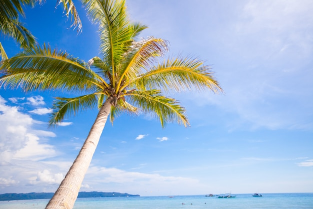 Coconut palm tree on the sandy beach and blue sky