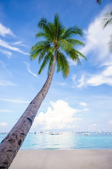 Coconut palm tree on the sandy beach blue sky