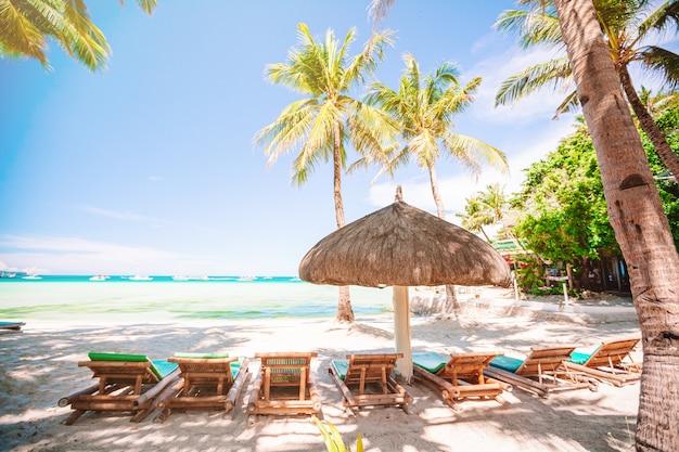 Coconut palm tree on the sandy beach