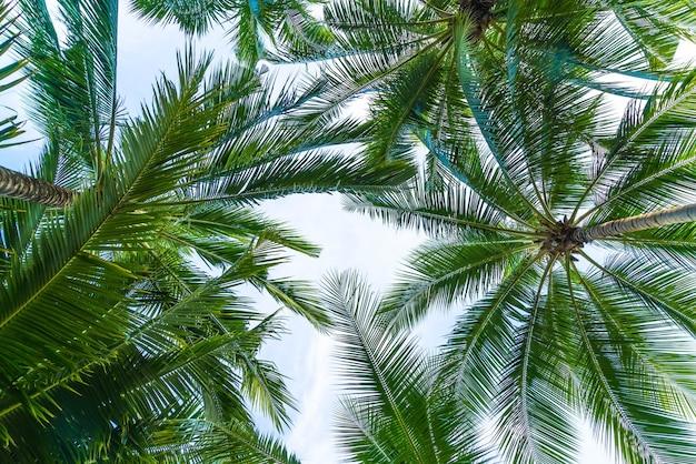 Coconut palm tree on sky background