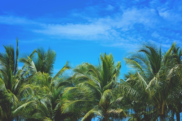 Coconut palm tree and sky nature at sea background with copy space.