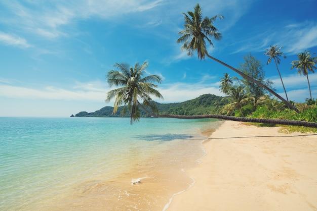 Coconut palm tree over summer beach sea in phuket ,thailand.