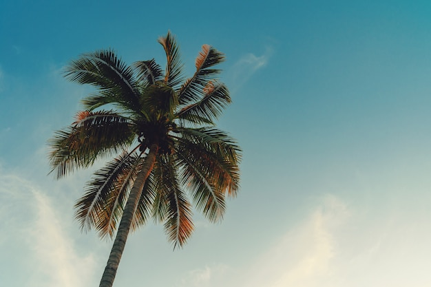 Coconut palm tree at tropical coast in island beach with vintage tone.