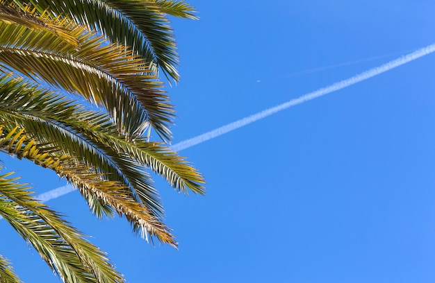 Coconut palm tree with blue sky ond plane track