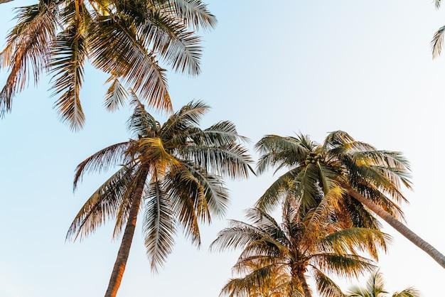 Coconut palm tree with blue sky