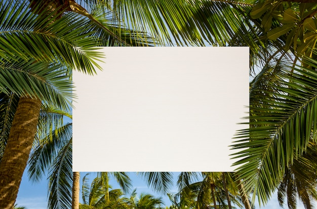 Coconut palm tree with copy space