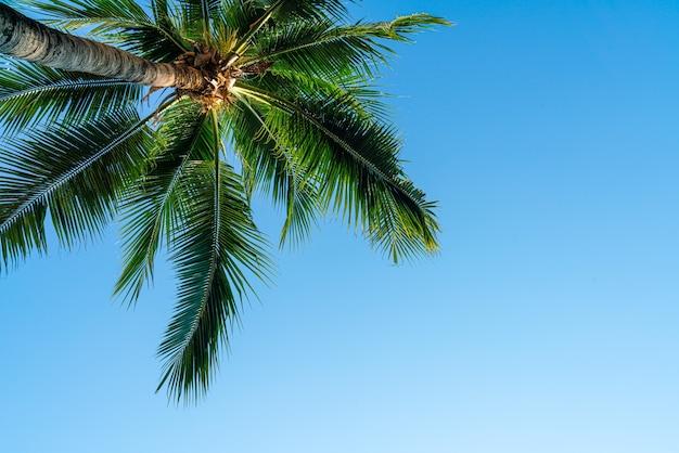 빈 하늘 및 복사 공간 코코넛 야자수