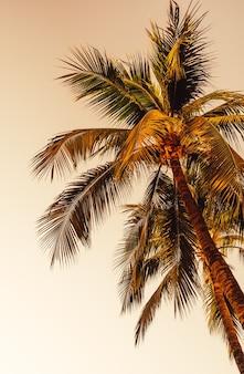 빈 하늘과 복사 공간이 있는 코코넛 야자수