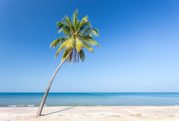 Coconut palm tree with white sand beach and blue sky background