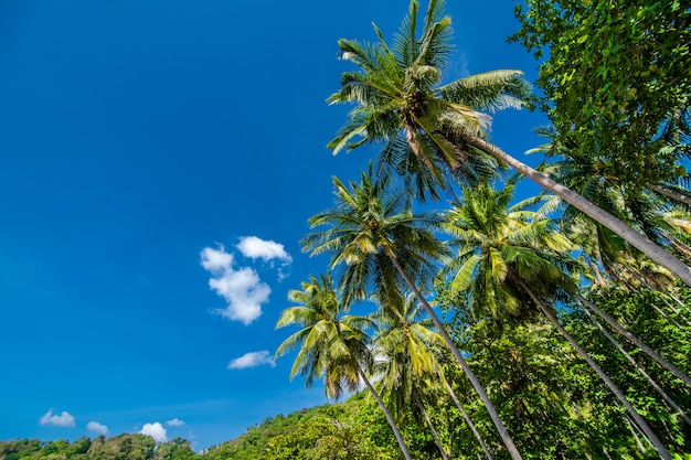 ココヤシの木と青い空、夏の職業