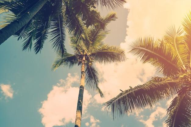 코코넛 야자수와 빈티지 효과와 빛나는 태양.