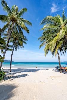 푸켓 파통 해변에서 코코넛 야자수와 청록색 바다. 여름 자연 휴가 및 열 대 해변 배경 개념 수직.