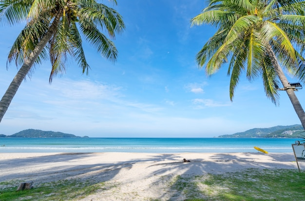 푸켓 파통 해변에서 코코넛 야자수와 청록색 바다. 여름 자연 휴가 및 열 대 해변 배경 개념.