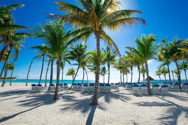 ココナッツ椰子の木、美しい熱帯の背景