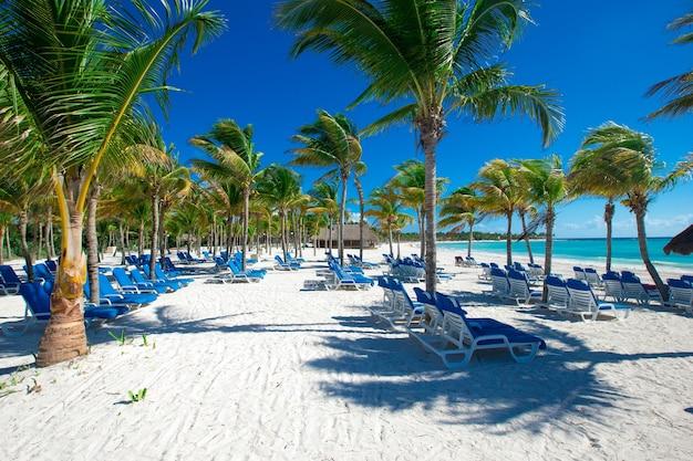 Coconut palm trees, beautiful tropical beach