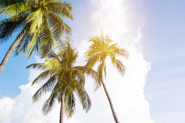 Coconut palm trees, beautiful tropical landscape