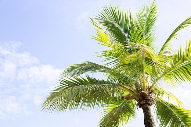 Кокосовые пальмы, красивый тропический с небом и облаками.
