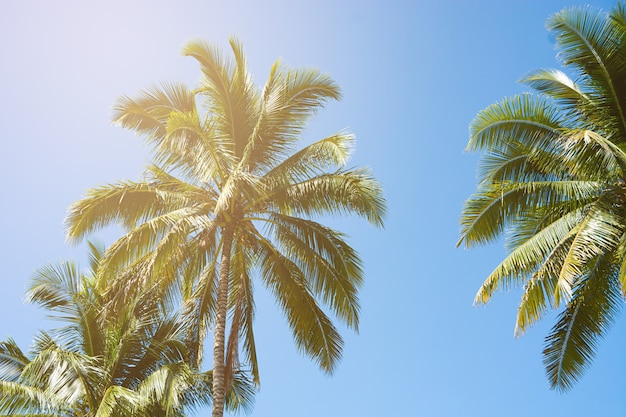 Coconut palm trees, beautiful tropical