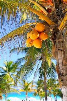 Coconut palm trees caribbean tropical beach