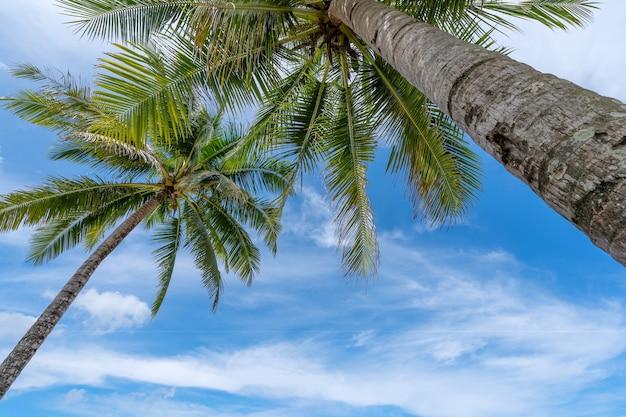 夏と旅行の背景の概念の下から見た青い空と白い雲の背景にココナッツ椰子の木。