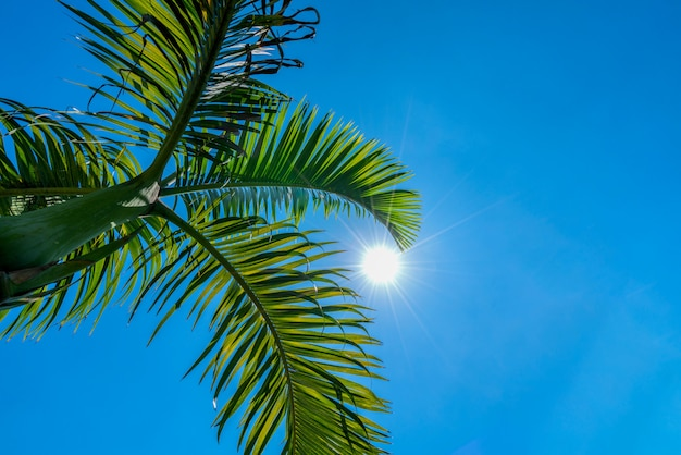 Coconut palm trees perspective view and blue sky