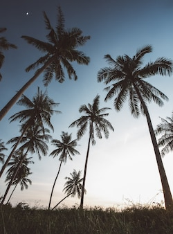 Силуэты кокосовых пальм на пляже