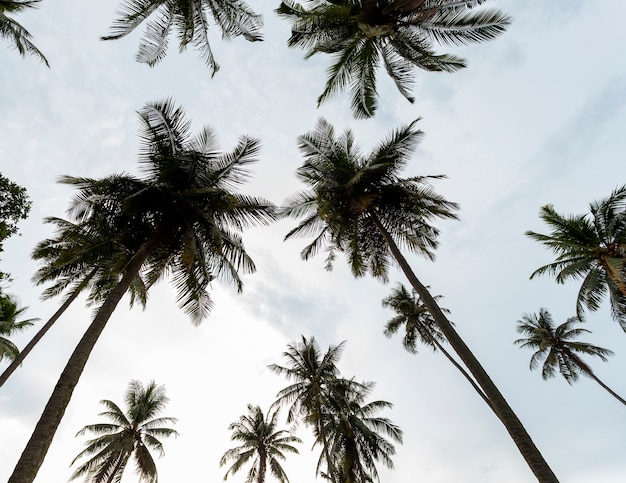 Coconut palm trees in the sky background