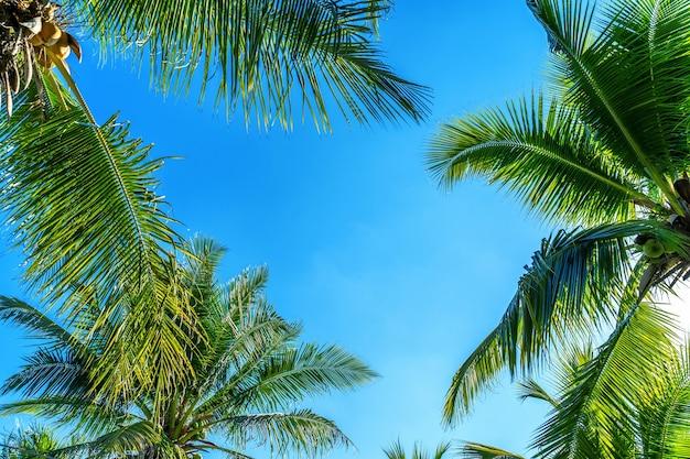ココナッツヤシの木。熱帯の背景。 無料写真