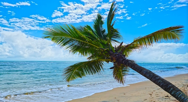 Coconut palm with green coconuts, calm sea and blue sky with white clouds