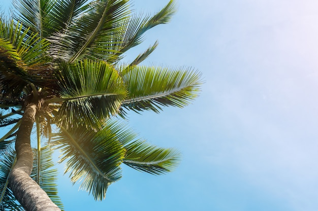 Coconut palms on blue sky background