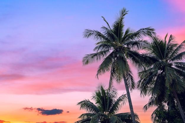 ココナッツ椰子の木と雲の夕暮れ