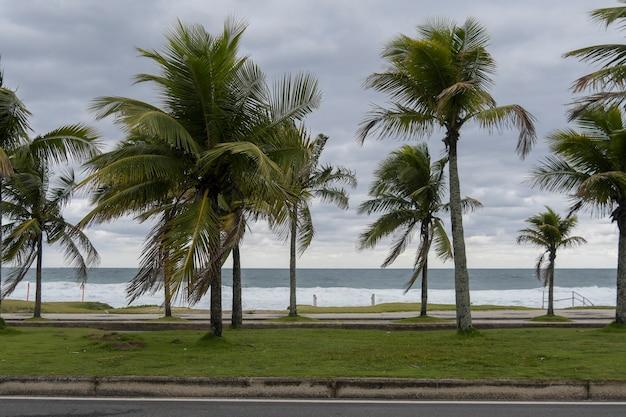 Кокосовые пальмы на фоне пляжа в пасмурный, холодный день