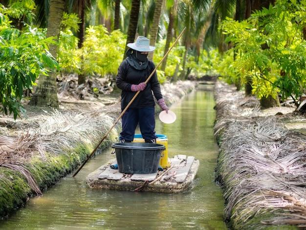 ココナッツプランターはココナッツの木に肥料を与えています。農業活動
