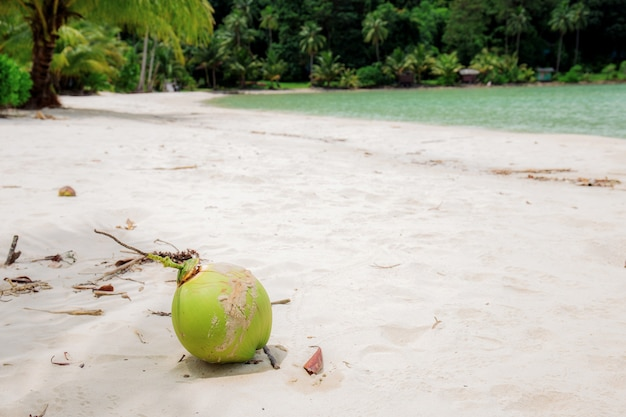 Coconut on sand at the sea in thailand.
