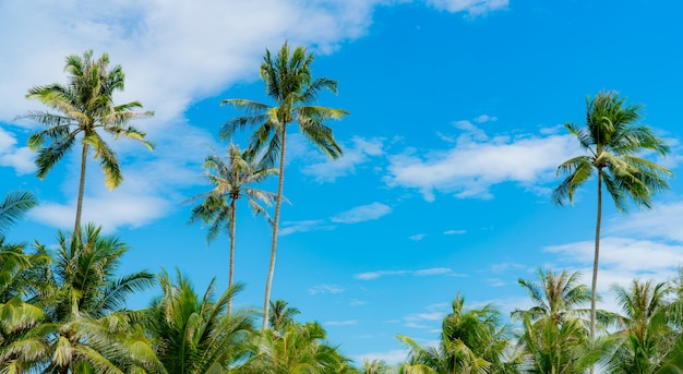 青い空と白い雲とココナッツの木。夏と楽園のビーチコンセプト。熱帯のヤシの木。島の夏休み。リゾートのココナッツの木。