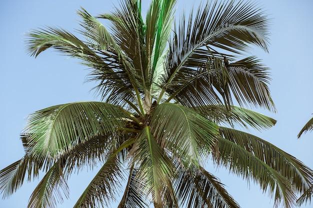 空を背景にココナッツの木