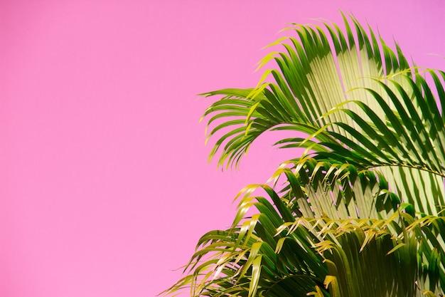 珍しいピンクの空を背景にココナッツの木