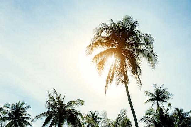 日没時のココナッツの木。